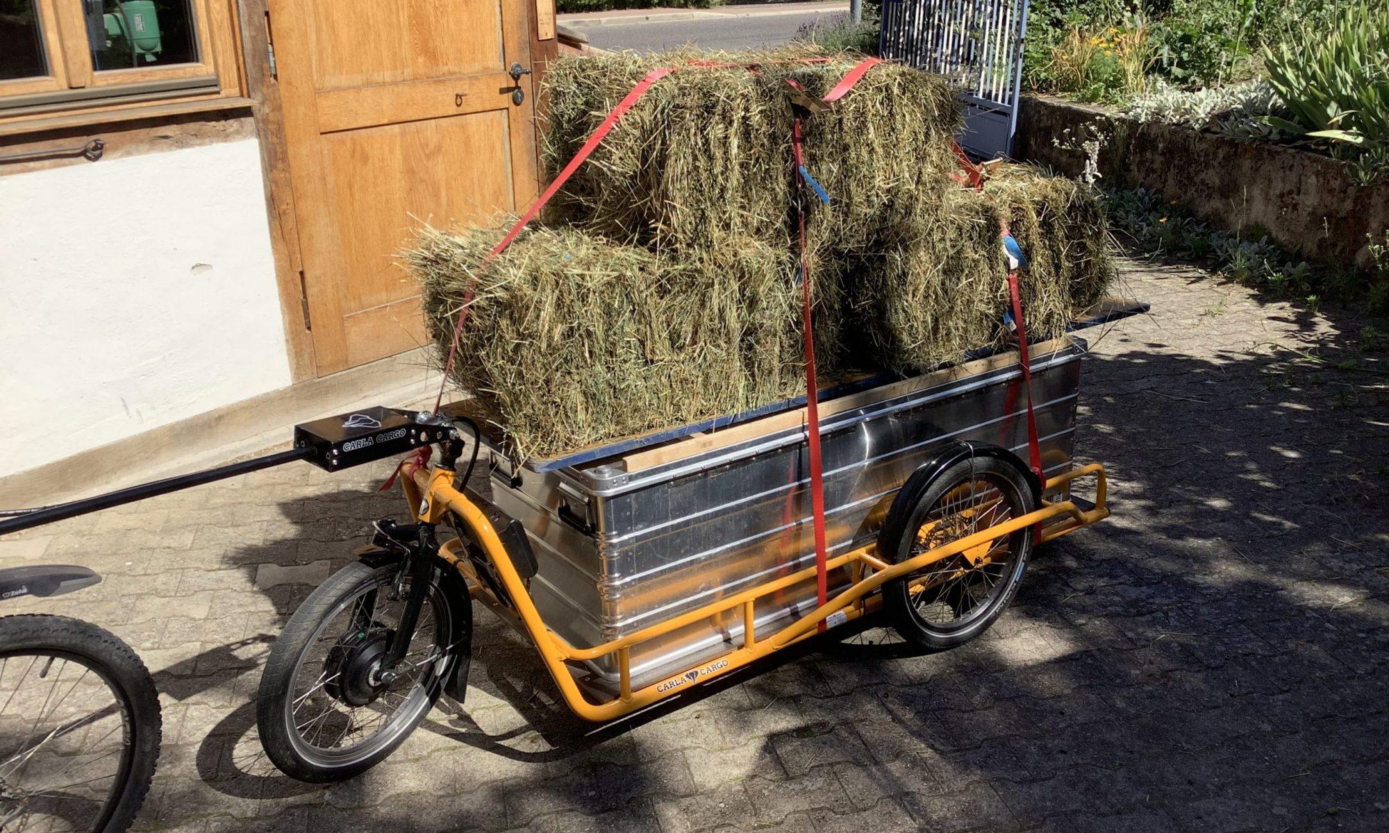 Cargo Malsch